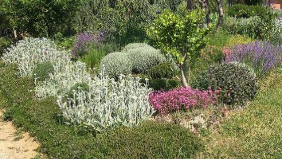 Immagine Nona edizione Summer School of Floriculture