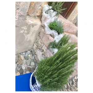 Le nostre erbe aromatiche di Albenga al DFF di Finale Ligure