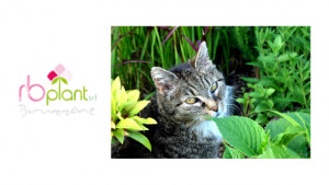 Rimedi naturali efficaci per tenere lontano i gatti da piante e fiori.