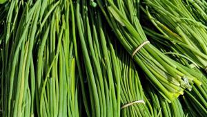 Erba cipollina RB Plant Albenga
